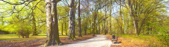 Park in de lentetijd stock foto's