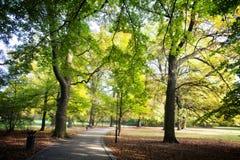 Park in de lentetijd Royalty-vrije Stock Afbeeldingen