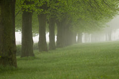 Park in de mist Royalty-vrije Stock Afbeeldingen