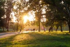 Park in de stad van Krasnoyarsk Royalty-vrije Stock Afbeeldingen