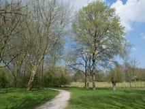 Park in de vroege lente Royalty-vrije Stock Fotografie