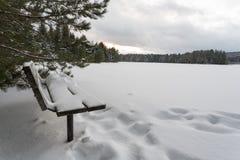 Park in de winter Stock Afbeeldingen