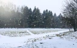 Park in de winter Stock Foto's