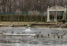 Park in de winter en eenden, Uraine Royalty-vrije Stock Fotografie