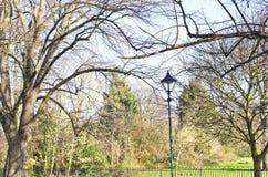 Park in de winter met blauwe hemel Stock Foto's