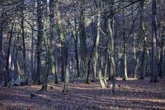 Park in de wintertijd Royalty-vrije Stock Afbeeldingen