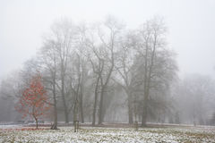 Park in december after the first snow in fog. With red leaves on the small tree Royalty Free Stock Photo