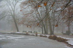 Park in december with frozen lake after first snow Royalty Free Stock Photo