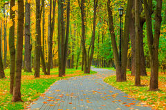 Park with deciduous trees removed in the fall Stock Photography