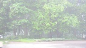 Park des dichten Nebels des Auto-Antriebs stock footage