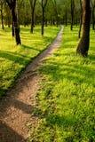 Park des Pfades morgens Lizenzfreies Stockbild