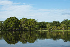 Park des Sees im Frühjahr Lizenzfreie Stockfotos