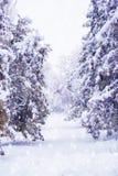 Park des verschneiten Winters Lizenzfreie Stockfotografie
