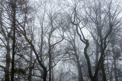 Park des verschneiten Winters im Nebel Lizenzfreies Stockbild