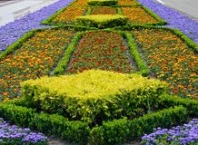Park design. The city park city of Stavropol is a fine example of art park. Flower carpets in different colors and shapes, striking in its beauty Royalty Free Stock Images