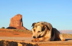 Park dog Royalty Free Stock Photo