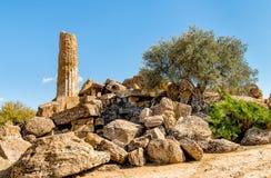 Park dolina świątynie w Agrigento, Sicily Fotografia Royalty Free