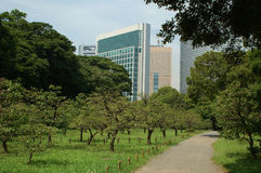 Park in downtown Tokyo. Scenic view of trees in green park with skyscrapers in background, downtown Tokyo, Japan Stock Photos