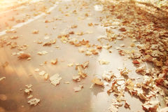 Park with dry yellow leaves Royalty Free Stock Image