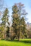 Park - drzewa na słonecznym dniu Fotografia Royalty Free