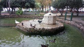 Park of the ducks of San Fernando royalty free stock photo