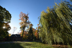 Park, early morning.  Weeping Willow tree etc. NJ New Jersey. Trees and long shadows from early yellow sunlight Royalty Free Stock Photography