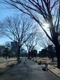 Park in een de wintertijd stock afbeelding