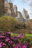 Park in een grote stad Royalty-vrije Stock Afbeelding