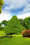 Park with exotic plants Stock Images
