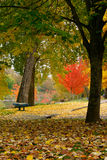 Park in the fall 1 Stock Photography
