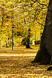 Park in fall Stock Photo