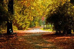 Park at fall Stock Photography