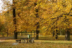 Park in fall or autumn Stock Photo