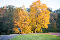Park at fall Stock Images