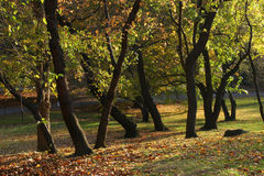 Park in fall colors Stock Photography