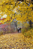 Park with fall colors Stock Photo