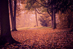 Park in fall Royalty Free Stock Photos