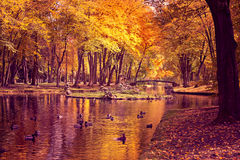 Park in fall Royalty Free Stock Photography