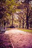 Park in fall Stock Image