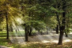 Park in the fall. Slanting rays of the autumn sun in the park Royalty Free Stock Images