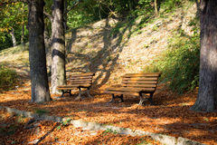 Park in the fall Stock Photography
