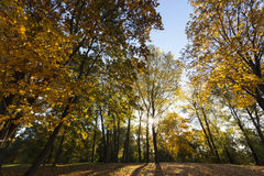 Park in the fall Royalty Free Stock Photography