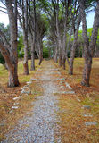 park on  Filerimos mountain.Greece, Rhodes. Royalty Free Stock Photography