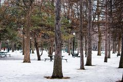 A park filled with trees and covered with snow stock image
