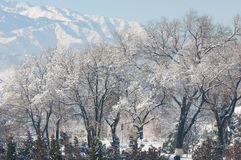 Park. First prizident, lands in the fog in winter. Kazakhstan. Almaty Royalty Free Stock Image