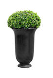 Park flowerpot with evergreen plant with clipping path. Park flowerpot with evergreen plant isolated on white with clipping path royalty free stock image