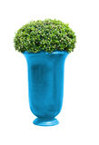 Park flowerpot with evergreen plant with clipping path Stock Photos