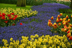 Park of flowers. Garden of flowers in yellows and lavender with a few tulips Royalty Free Stock Images