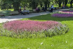 Park with flowers at the center of town of Silistra, Bulgaria stock photo