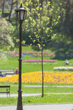 Park with flowers at the spa Vrnjacka Banja. View of the park with flowers at the spa Vrnjacka Banja with a street lamp in the foreground, Shallow depth of field Stock Images